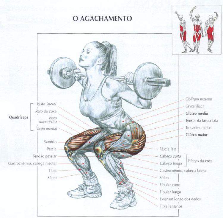 musculos agachamento