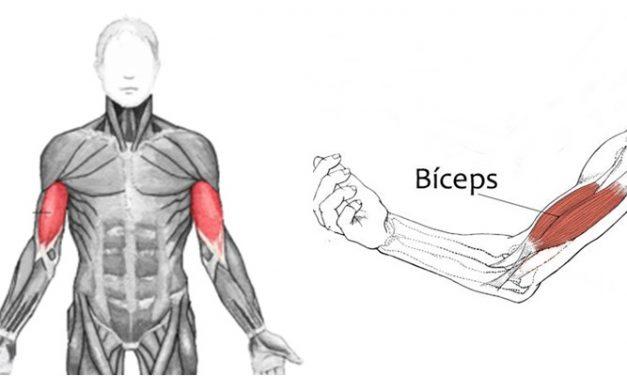 Qual o melhor exercício para bíceps?