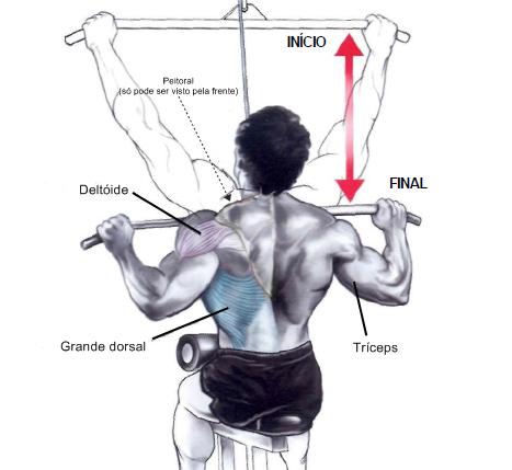 puxadas músculos