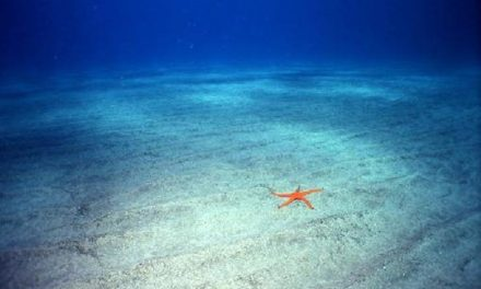 Estratégias para acabar com a concorrência. Em qual oceano você navega?