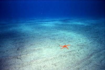 Em qual oceano você navega? Estratégias para acabar com a concorrência.