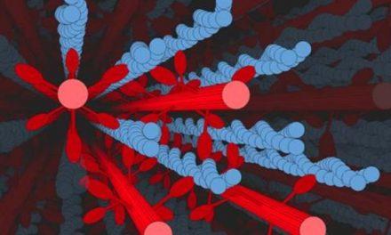 Novas descobertas sobre contração muscular