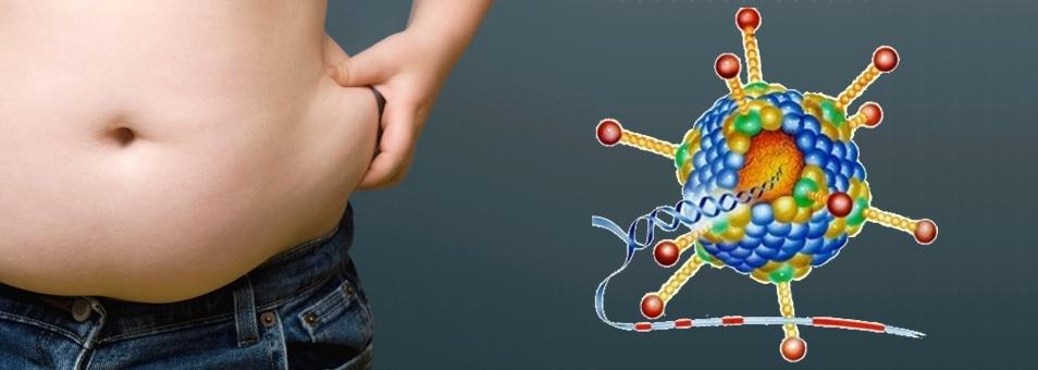 Vírus pode ser principal causa do aumento da obesidade no mundo