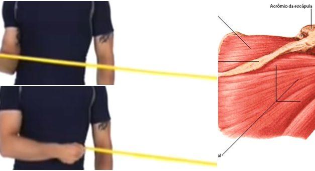 Como treinar Manguito Rotador