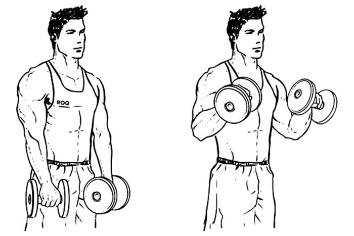 Exercício para antebraço - Rosca invertida